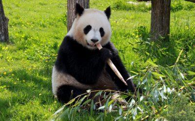 Il giro del mondo in Panda